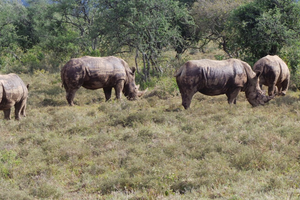 Rhinos-in-nakuru-national-park