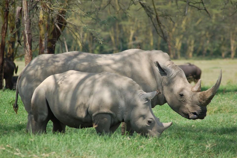 Nakuru rhinos  by Joachim Huber
