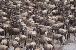 Masai Mara & Ke...