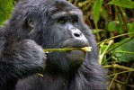3 Day Uganda Gorillas Experience in Bwindi Forest Park