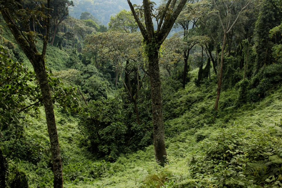 Nyungwe National Park  by Rwanda government