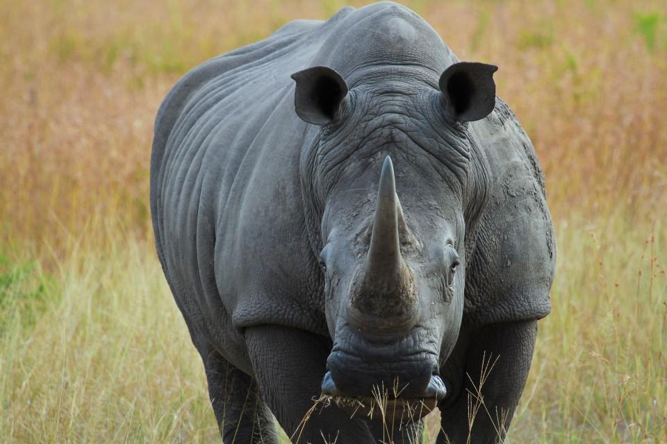 Sabi rhino  by Grant Peters