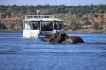 Chobe river boat cruise