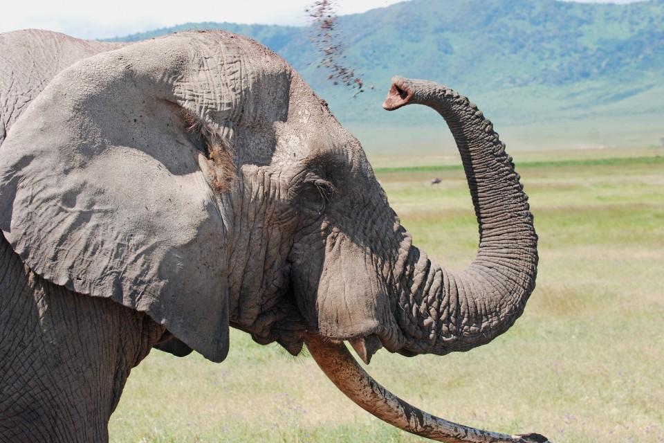 Elephant in Ngorongoro Crater  by Harvey Barrison