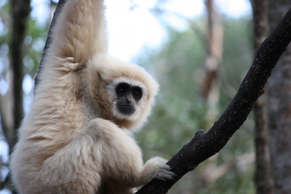 Monkeyland  large