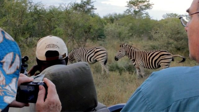 People and zebras