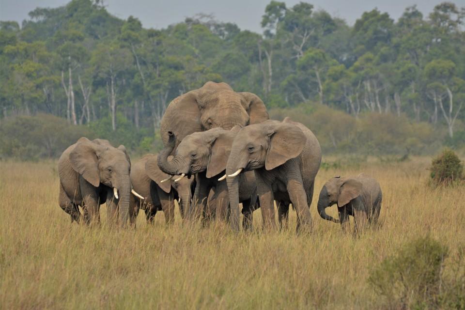 Kenya-experience elephant 4