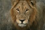 Budget Kruger, Swaziland & KwaZulu-Natal Lodge Safari