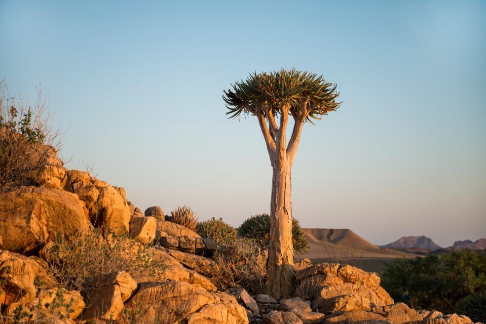 Namibia flora scene