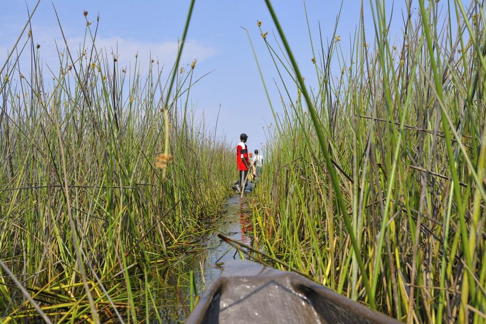 Okavango delta (3)