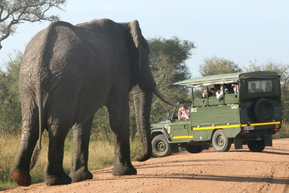 Elephant vehicle