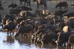 5 Day Southern Kruger Budget Lodge Safari