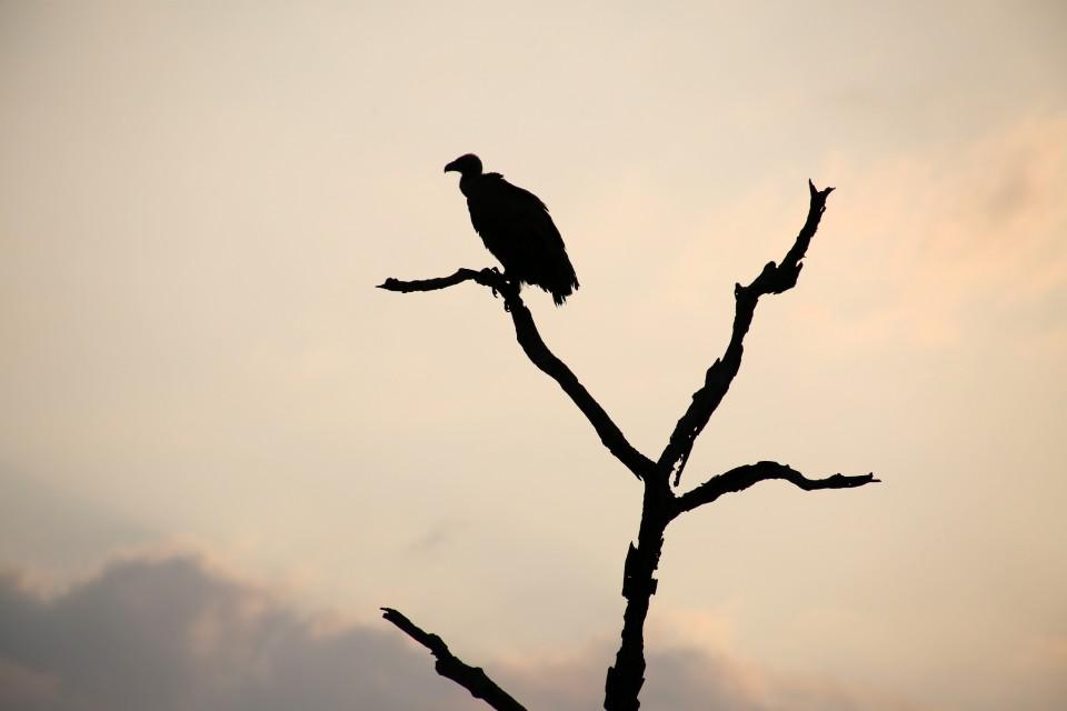 Birdlife of Africa  by Flowcomm