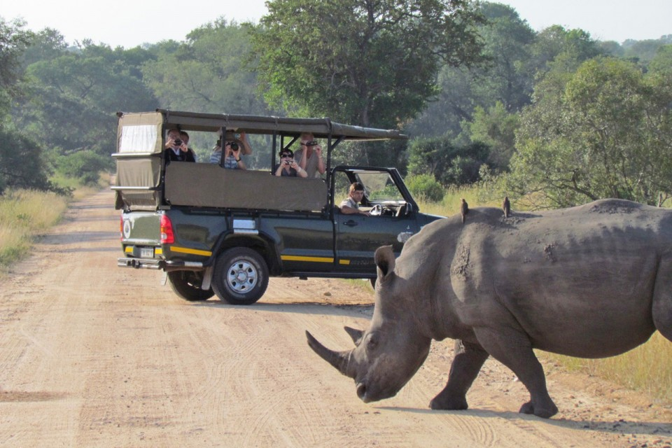 Rhino and vehicle