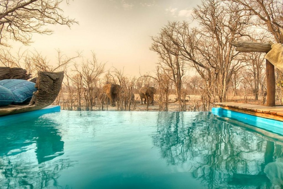 Lodge pool and elephants