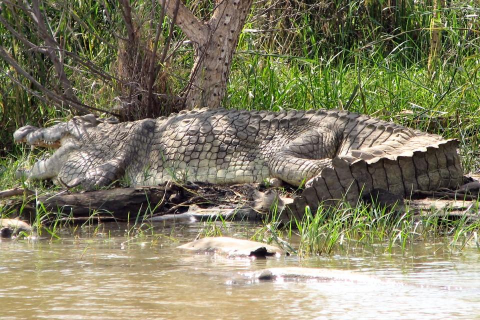Nechsar np - lake chamo crocodile market giant