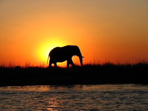 Chobe ele sunset  by Kirsten Weeks