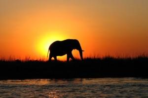 Chobe ele sunset by Kirsten Weeks