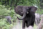 Victoria Falls, Hwange & Chobe Lodge Safari