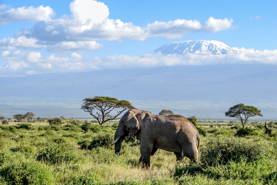 Amboseli scene