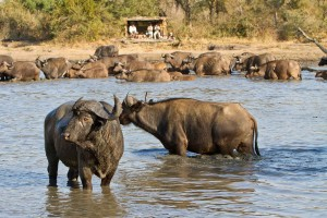 7-africa-on-foot-walking-safaris4