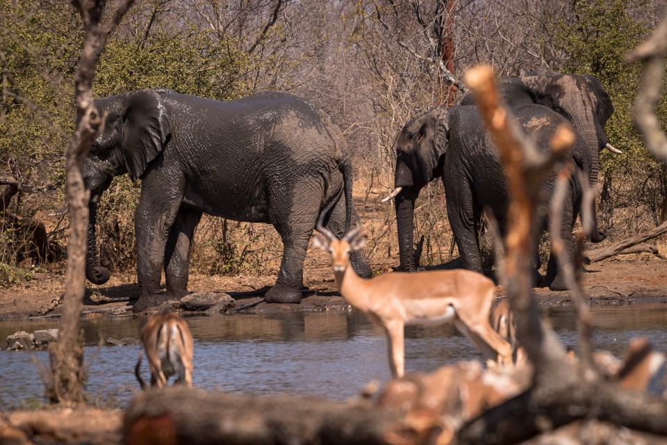 Kruger elephants & antelopes