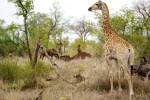 6 Day Kruger Park Backpackers Lodge Safari