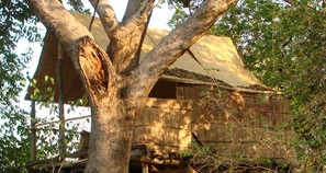 Tree bushcamp
