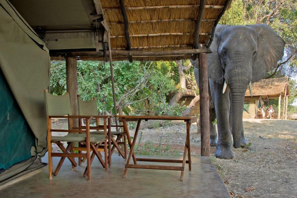 Luxury tent and elephant