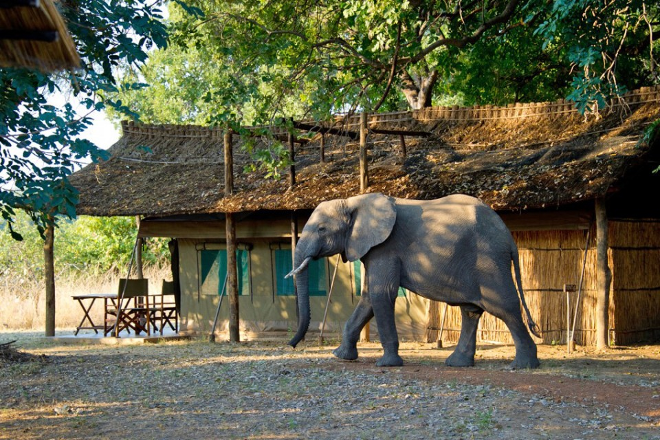 Luxury tent and elephant