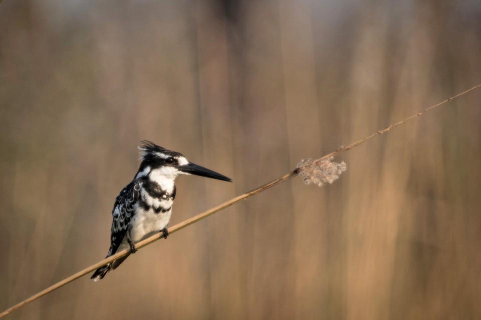 Delta birdlife