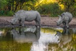 Experience Southern Africa Exclusive Budget Safari