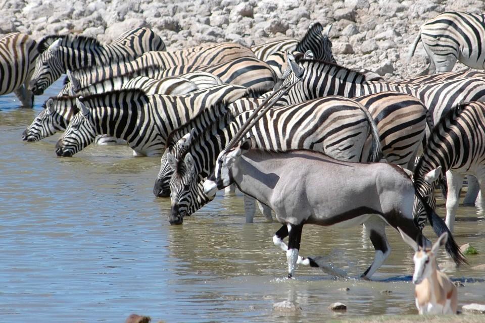 Etosha Park waterhole