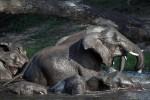 Kruger, Zimbabwe & Botswana Budget Lodge Safari