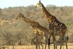 Best of Southern Africa Budget Lodge Safari
