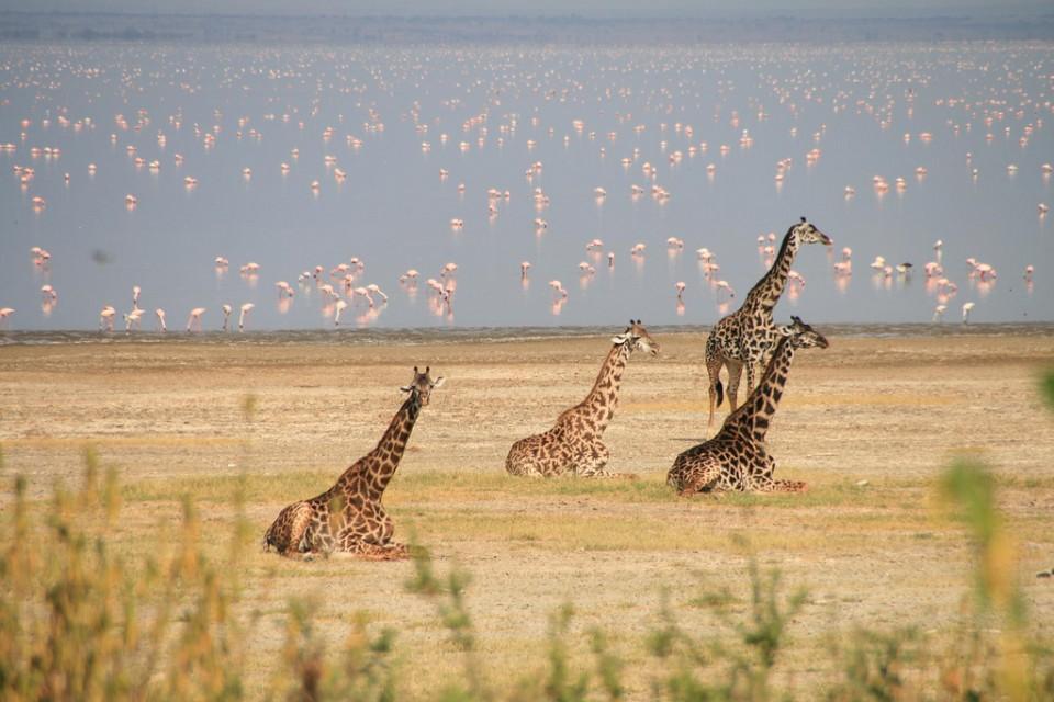 Lake Manyara  by Marc Veraart