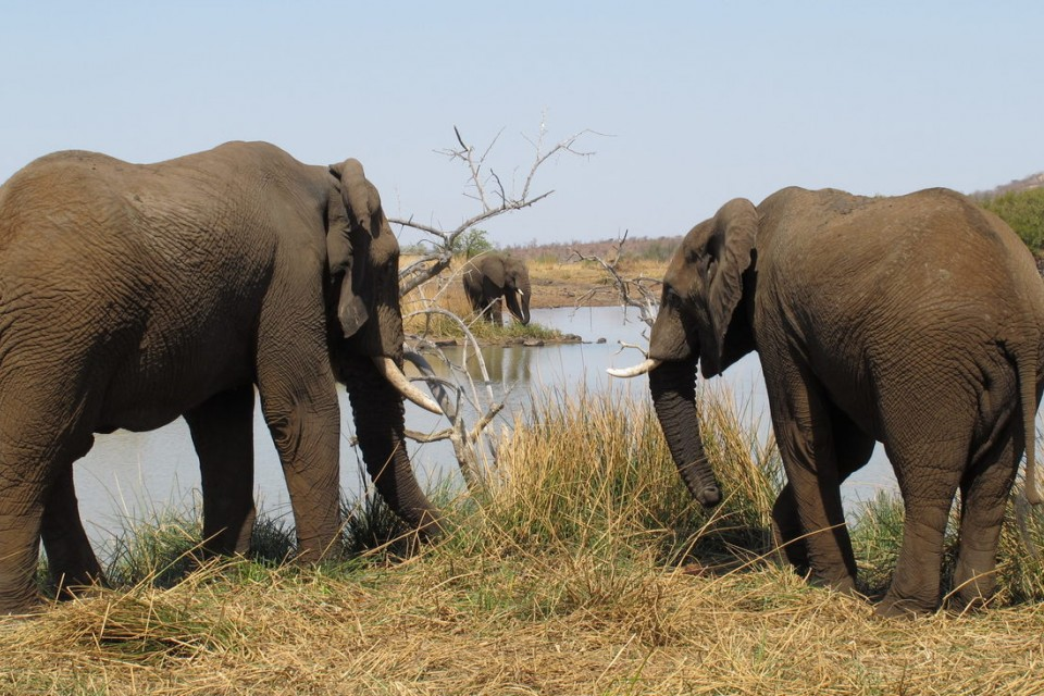 Pilanesberg elephants  by Derek Keats