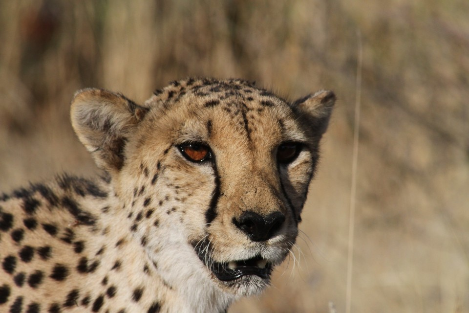 Spitzkoppe and cheetah park and game drive (47)