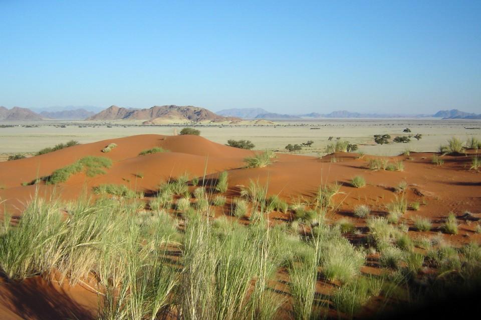 Dunes grass scenery