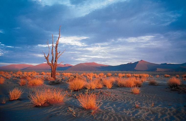 Glowing Desert