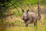 5 Day Exclusive Kruger Park Eco Camp Safari