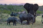 4 Day Kruger Park Eco Camp Safari at Private Reserve