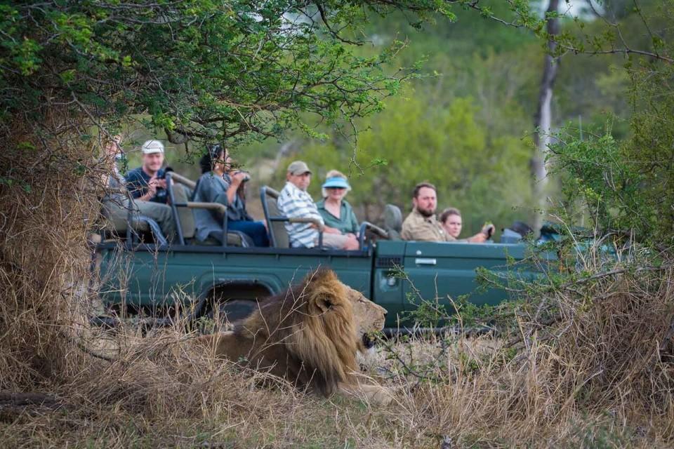 Lion sighting