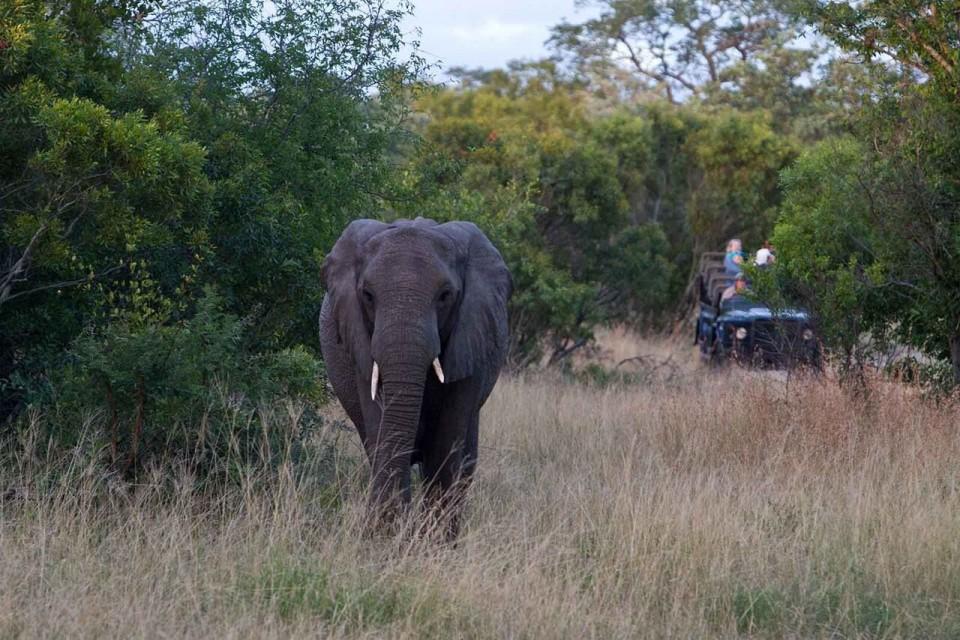 Elephant sighting