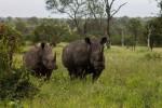 4 Day Kruger Park Green Camp Safari