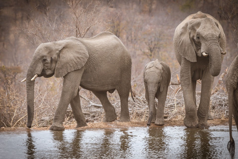Elephants near camp