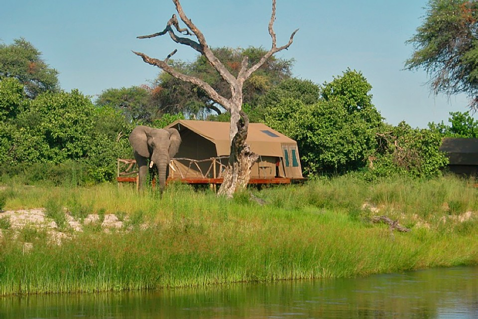 Elephant at Savuti Camp