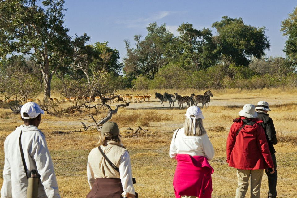 Game walk in Chobe