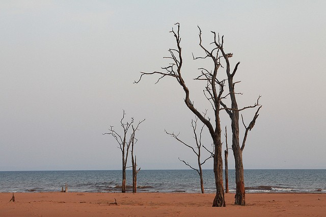 Lake Kariba  by Allan Grey