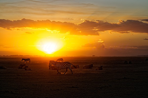 African sunset with zebras